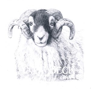 Swaledale tup pencil drawing