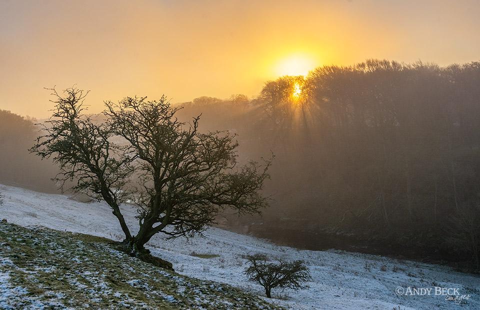 Sun burning through the morning fog.