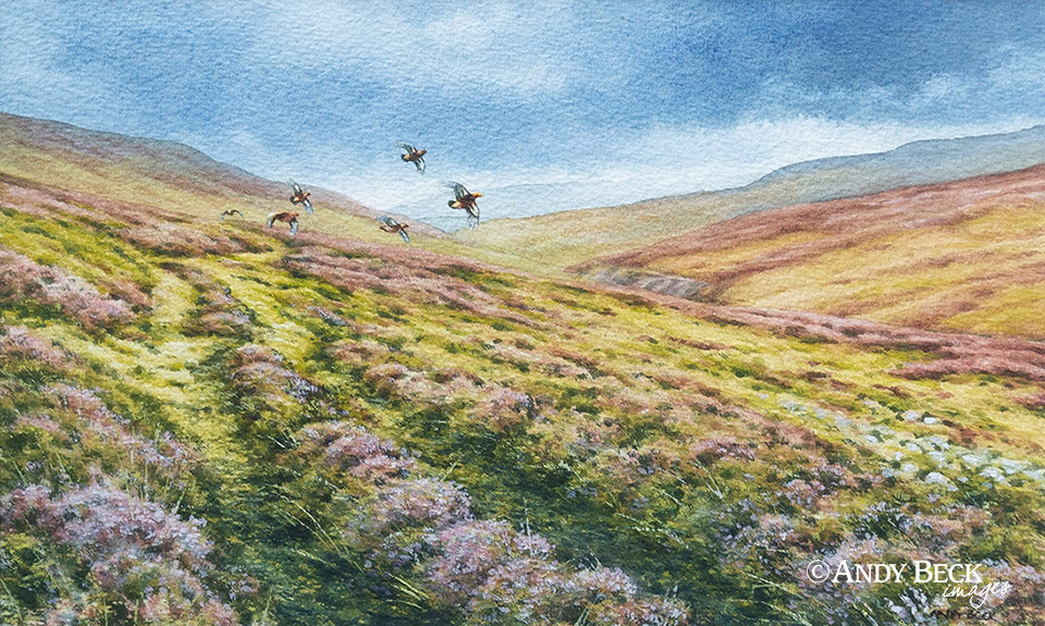 Red Grouse in Swaledale original watercolour painting