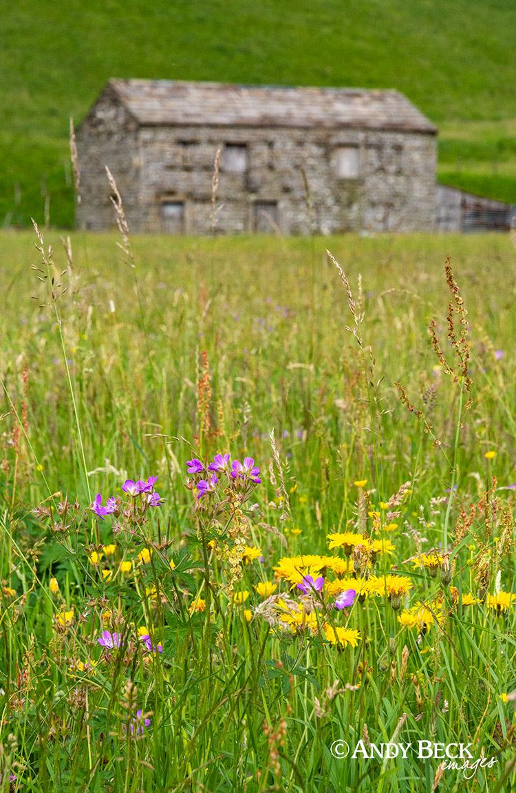 Hay meadow flowers