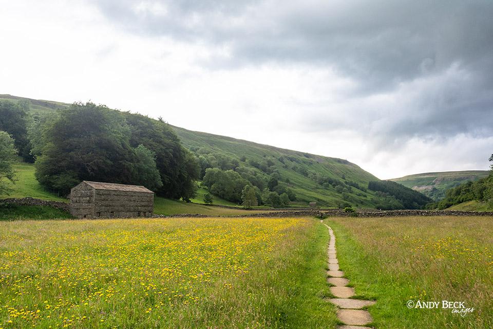 Muker haymeadow in July