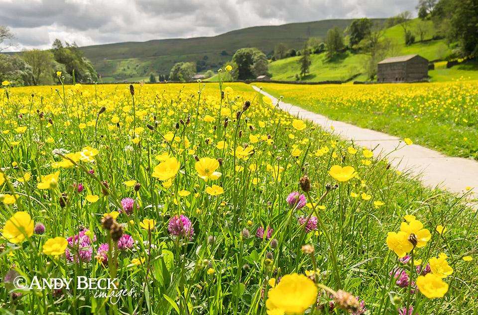 Muker meadows