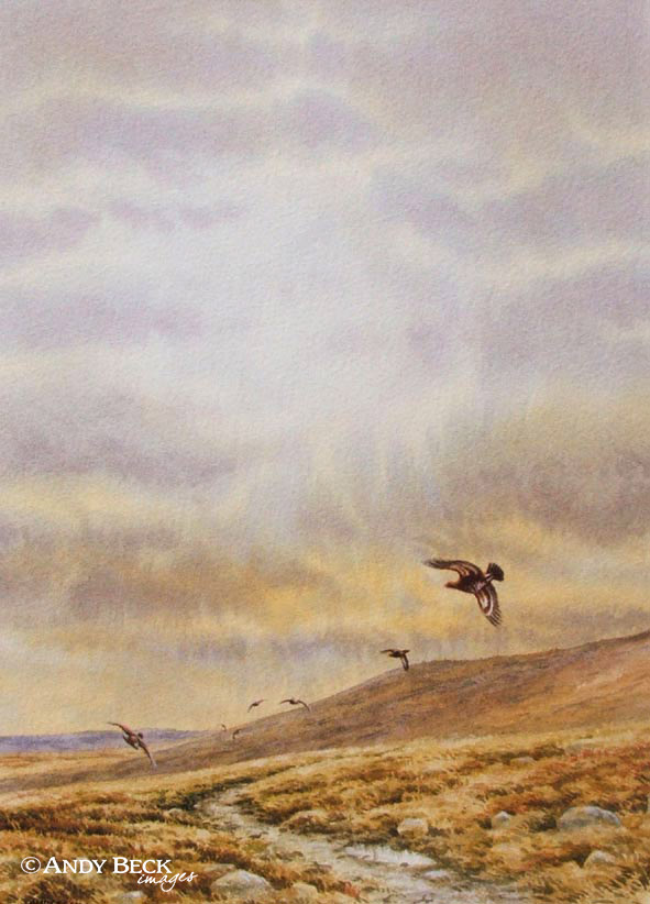 Red Grouse evening moor original watercolour painting