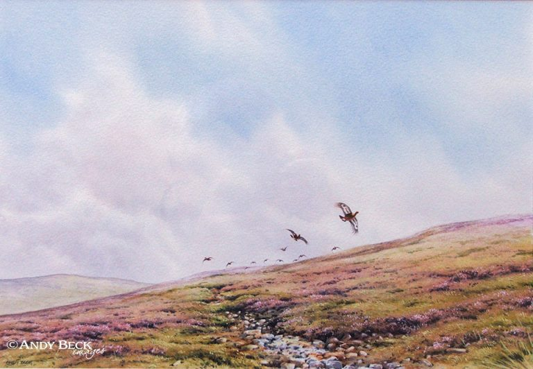 Red Grouse in high summer original watercolour painting