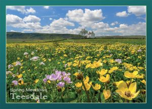 Teesdale Meadows postcard