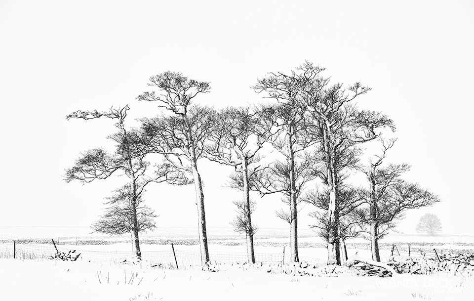 Winter trees at Gilmonby