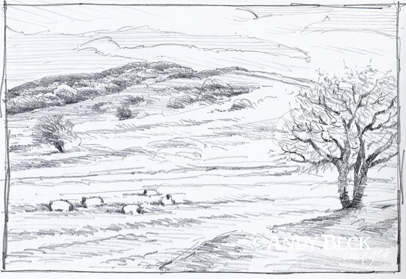 Orrest Head sketch