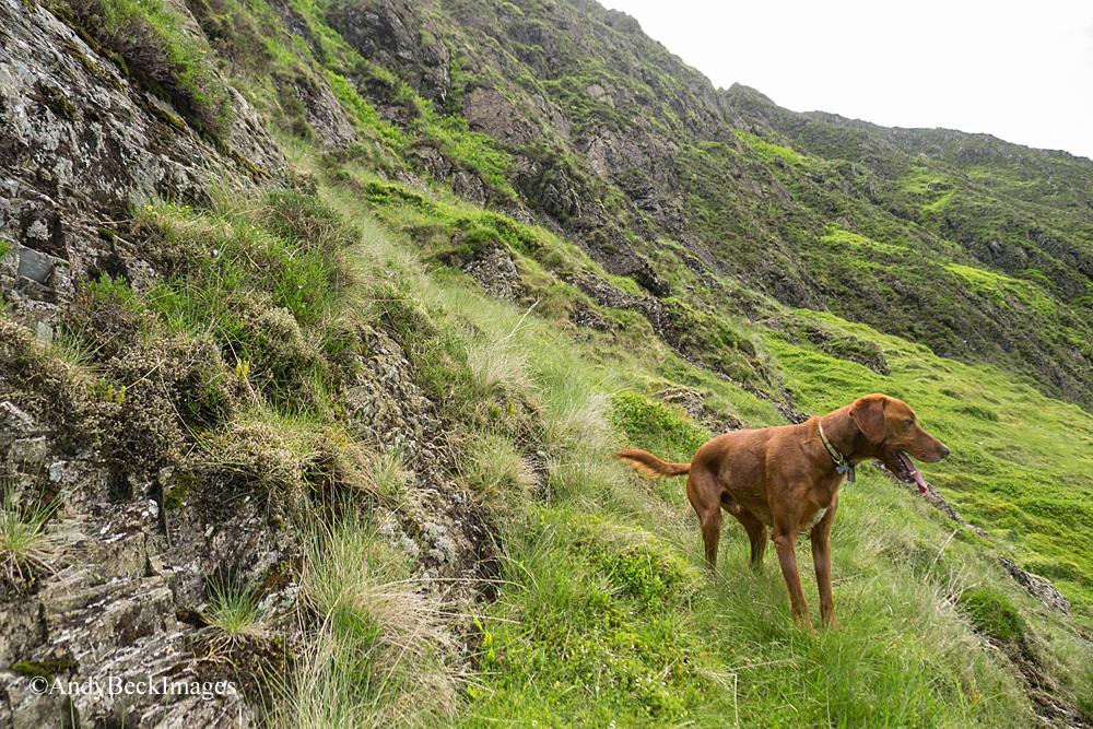 Bailey on Hobcarton Crag