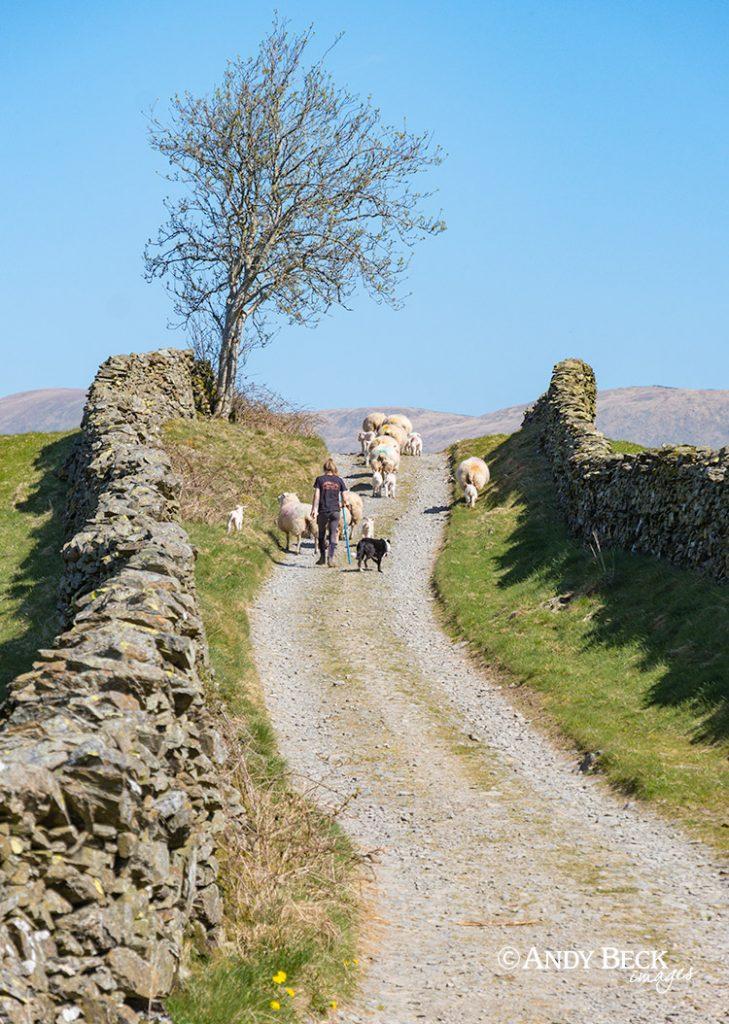 Grassgarth lane