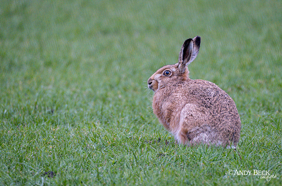 Hare, it is March after all