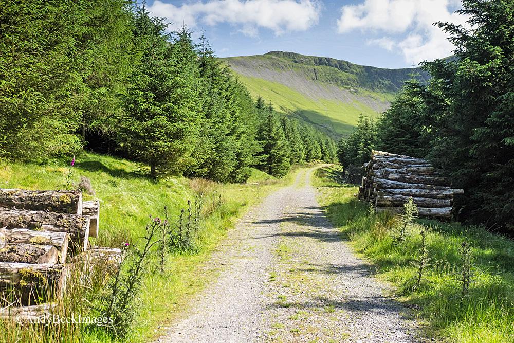 Hobcarton Crag from Whinlatter Forest