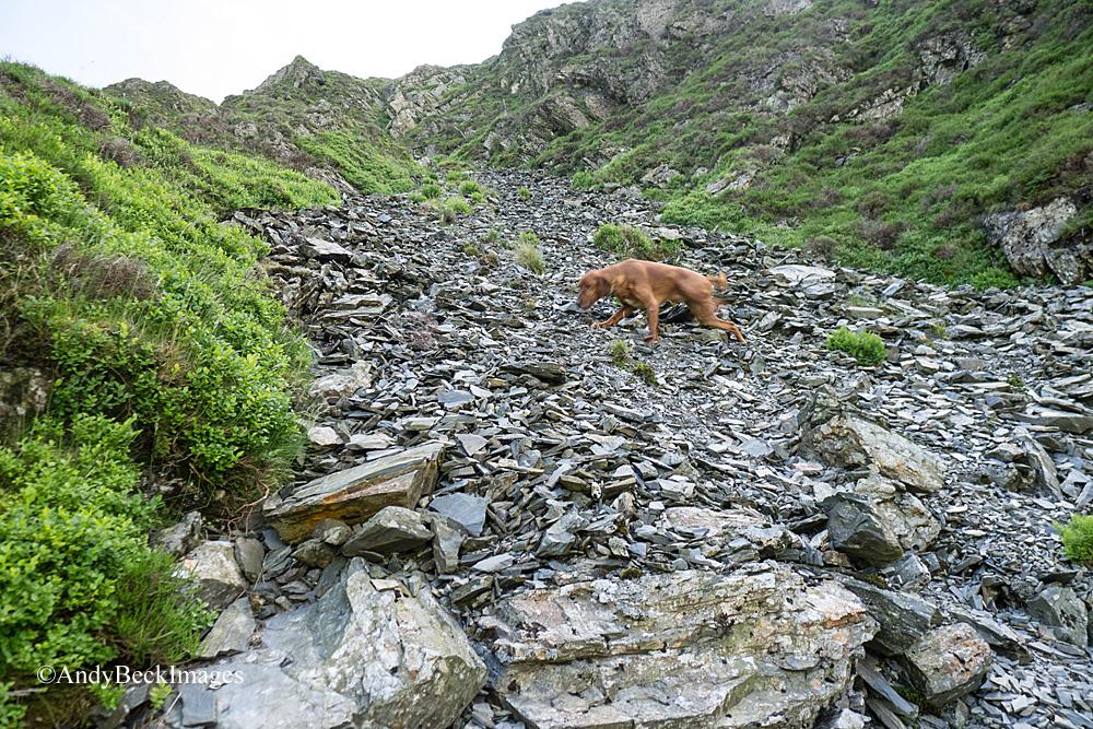 Hobcarton Crag gully scree