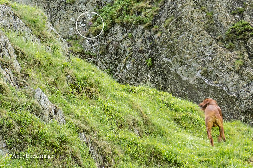 Hobcarton Crag slope