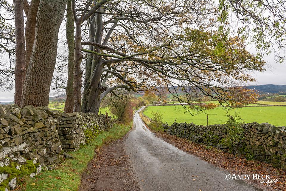 Lane near Malham