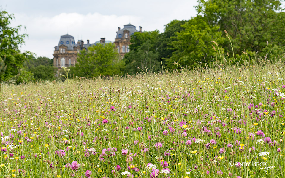 Bowes Museum and wildflowers