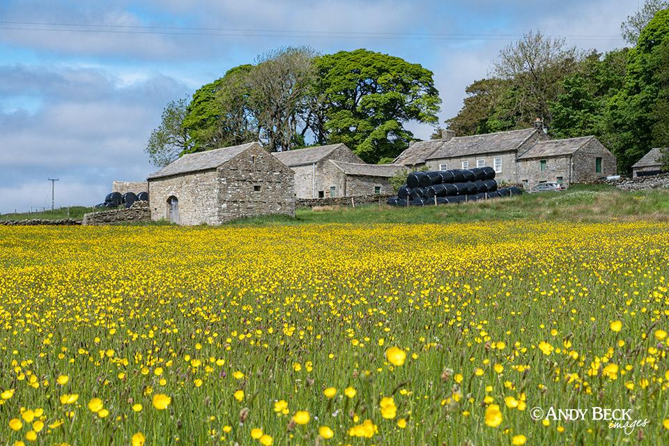 Hannah's Meadow wildflowers