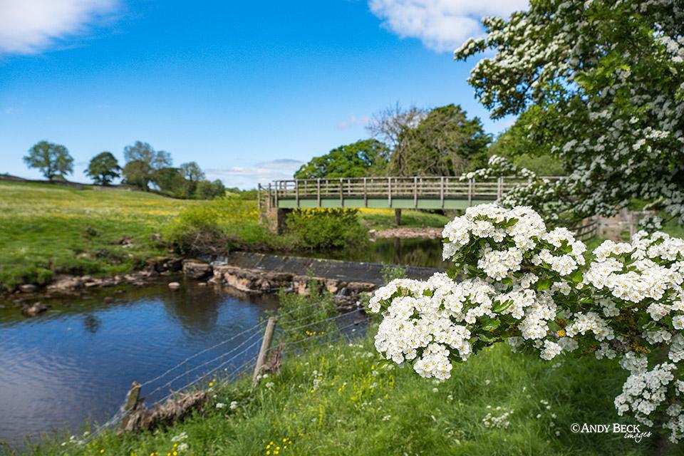River Greta and may blossom