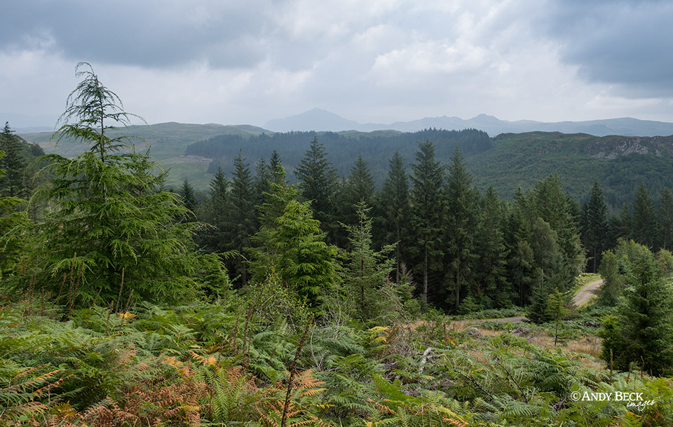 Miterdale and Harter Fell